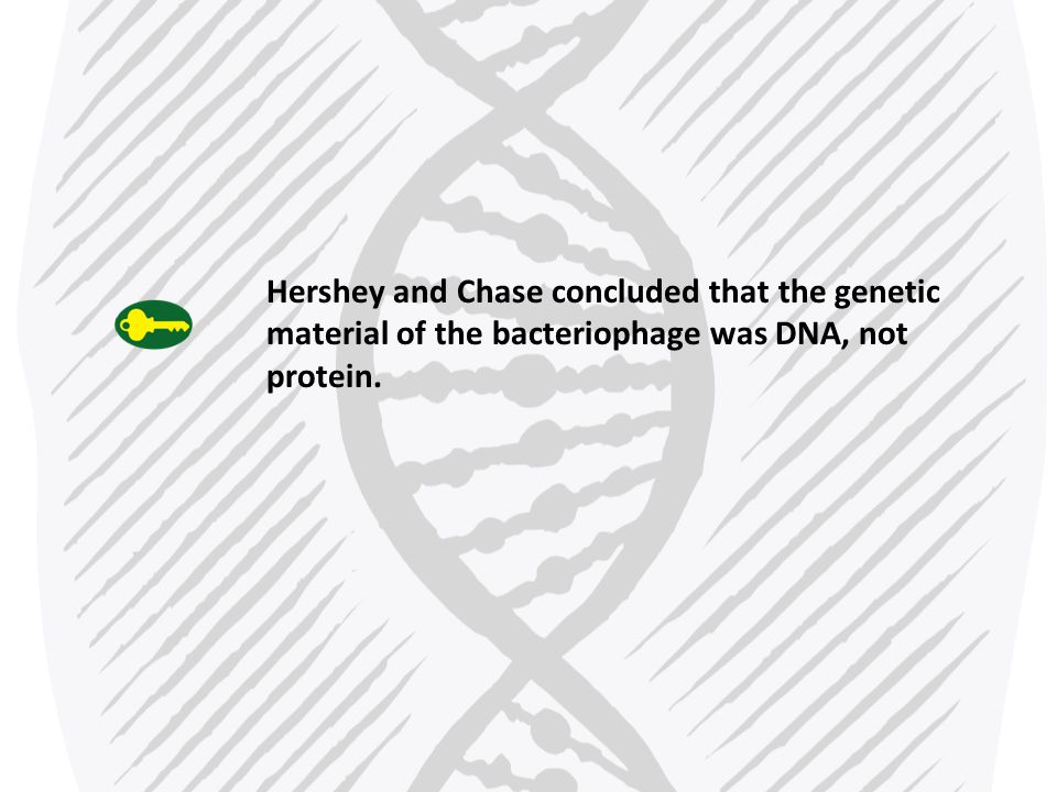 Copyright Pearson Prentice Hall The Components and Structure of DNA DNA is made up of nucleotides.