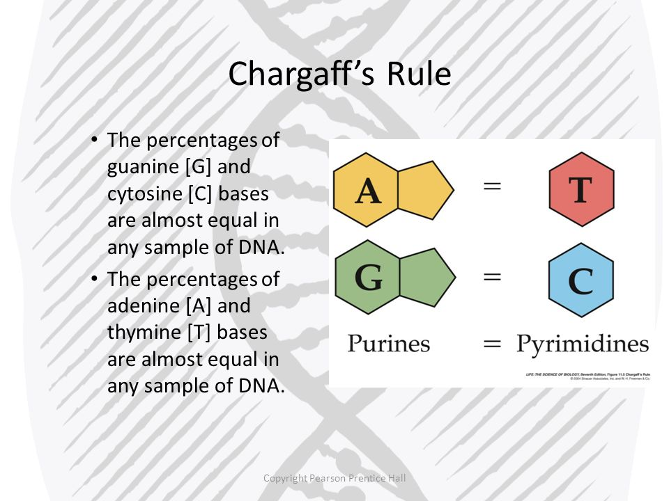 Copyright Pearson Prentice Hall The Components and Structure of DNA – X-Ray Evidence Rosalind Franklin used X-ray diffraction to get information about the structure of DNA.