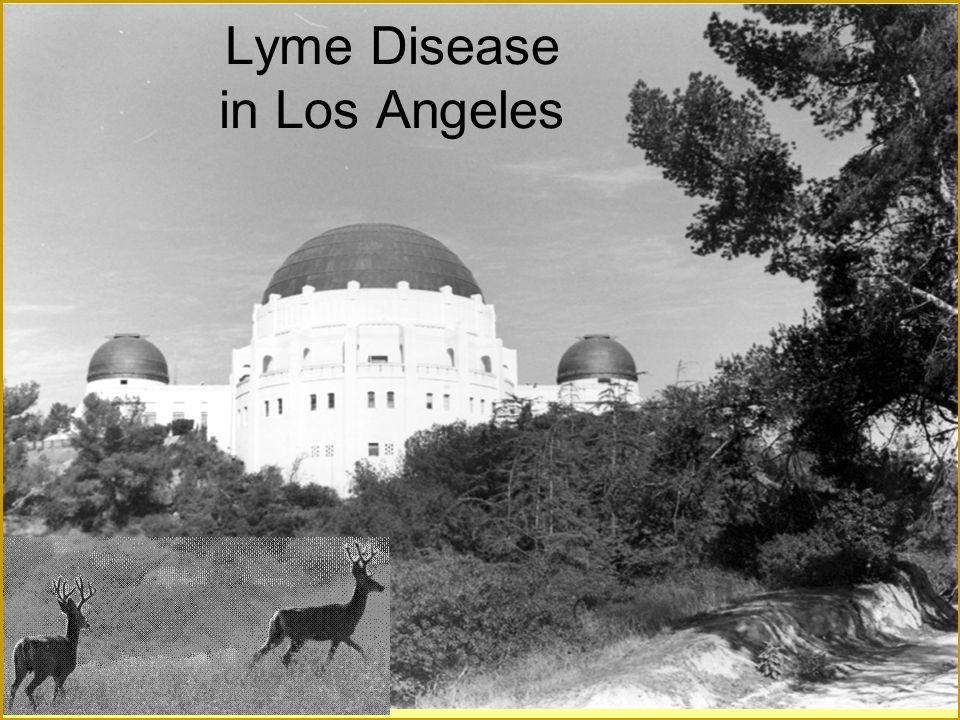 Lyme Disease in Los Angeles