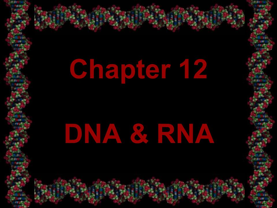 1 Chapter 12 DNA & RNA
