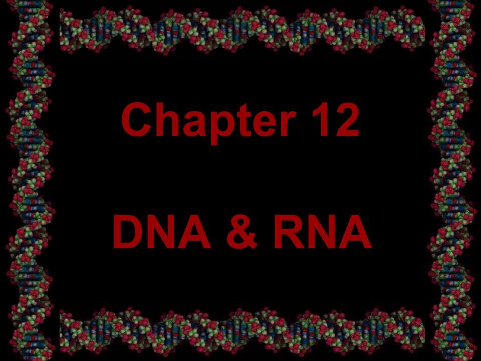 32 DNA