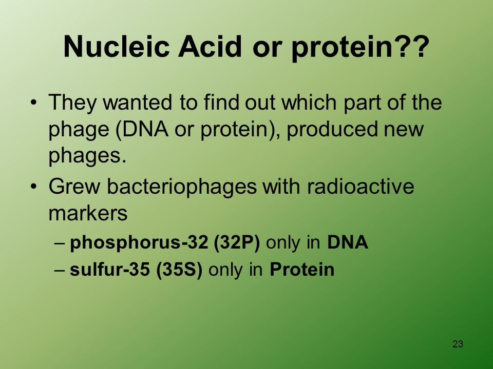 23 Nucleic Acid or protein .
