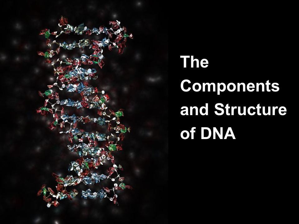 28 The Components and Structure of DNA