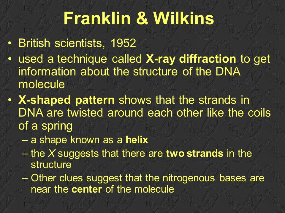 35 Franklin & Wilkins British scientists, 1952 used a technique called X-ray diffraction to get information about the structure of the DNA molecule X-shaped pattern shows that the strands in DNA are twisted around each other like the coils of a spring –a shape known as a helix –the X suggests that there are two strands in the structure –Other clues suggest that the nitrogenous bases are near the center of the molecule
