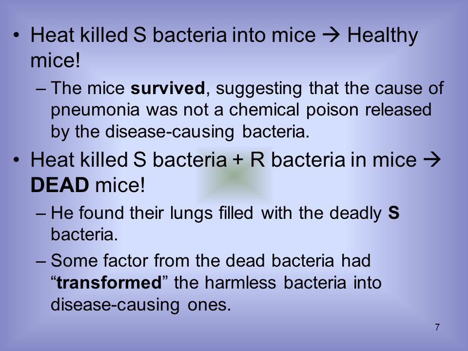 7 Heat killed S bacteria into mice  Healthy mice.