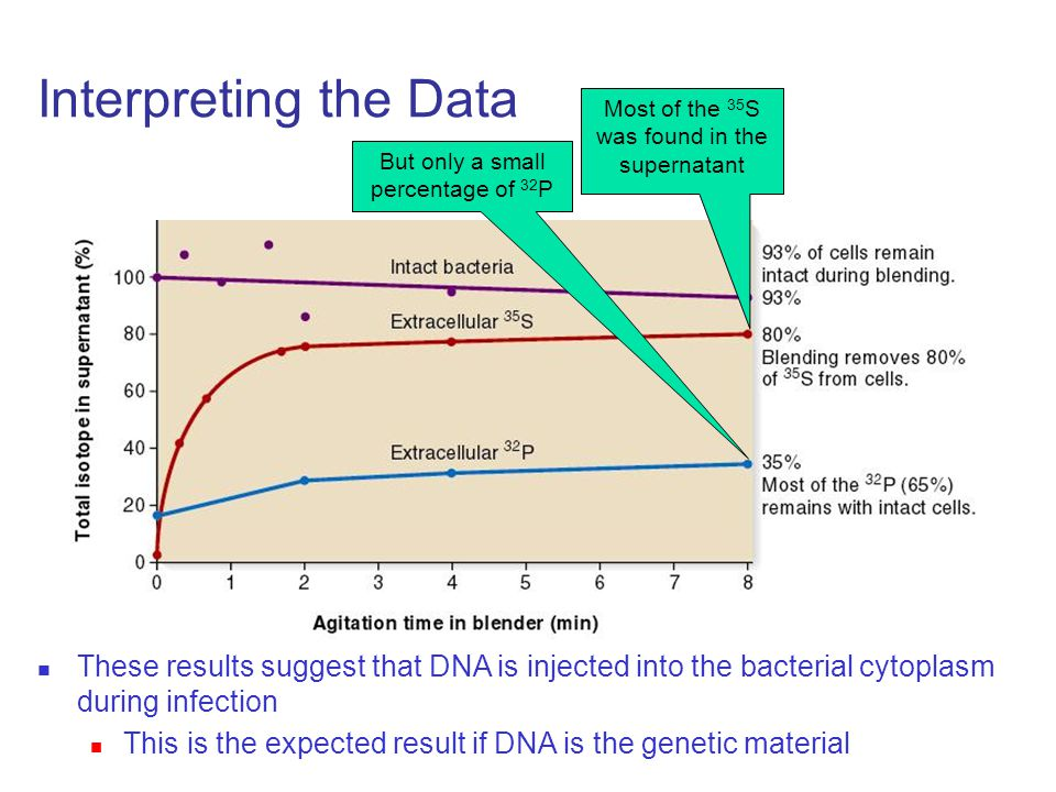 Interpreting the Data Most of the 35 S was found in the supernatant But only a small percentage of 32 P These results suggest that DNA is injected into the bacterial cytoplasm during infection This is the expected result if DNA is the genetic material