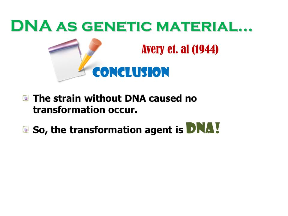 DNA as genetic material… Avery et. al (1944) conclusion The strain without DNA caused no transformation occur. So, the transformation agent is DNA!