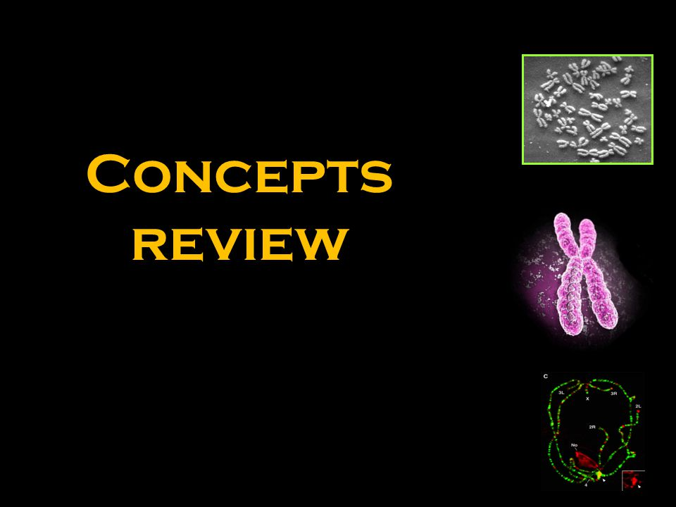 Concepts review