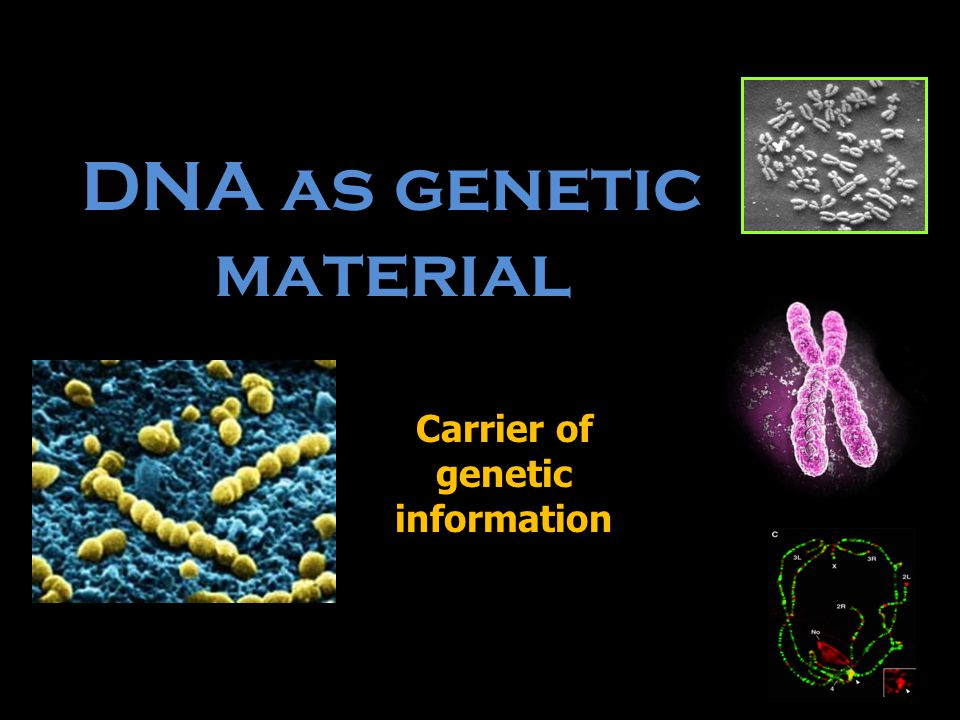 DNA as genetic material Carrier of genetic information