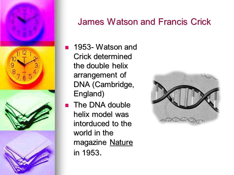 James Watson and Francis Crick 1953- Watson and Crick determined the double helix arrangement of DNA (Cambridge, England) 1953- Watson and Crick deter