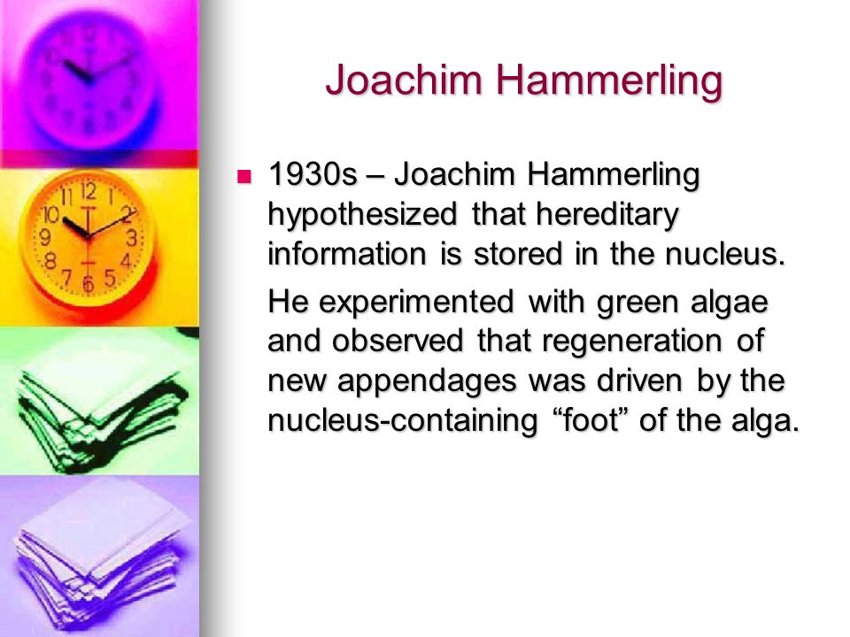 Joachim Hammerling 1930s – Joachim Hammerling hypothesized that hereditary information is stored in the nucleus. 1930s – Joachim Hammerling hypothesiz