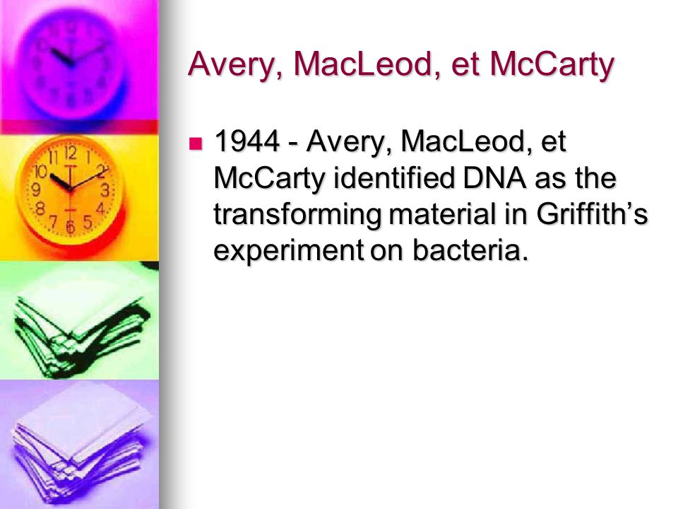 Avery, MacLeod, et McCarty 1944 - Avery, MacLeod, et McCarty identified DNA as the transforming material in Griffith's experiment on bacteria. 1944 -