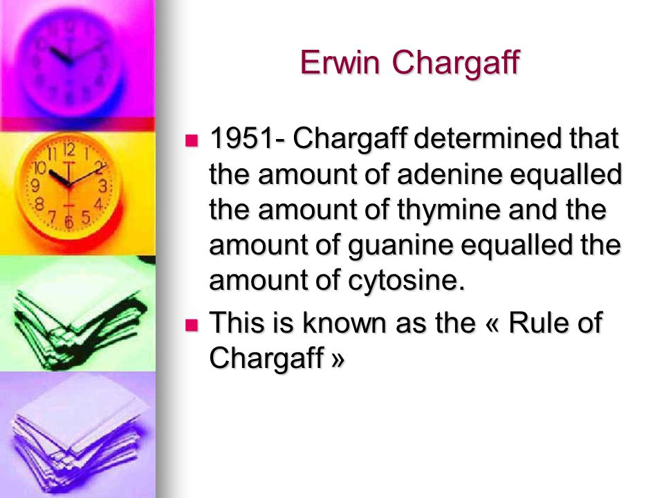 Erwin Chargaff 1951- Chargaff determined that the amount of adenine equalled the amount of thymine and the amount of guanine equalled the amount of cy