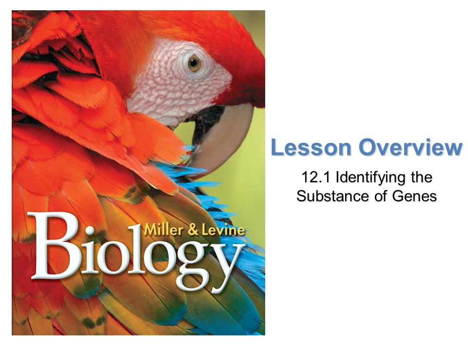 Lesson Overview 12.1 Identifying the Substance of Genes