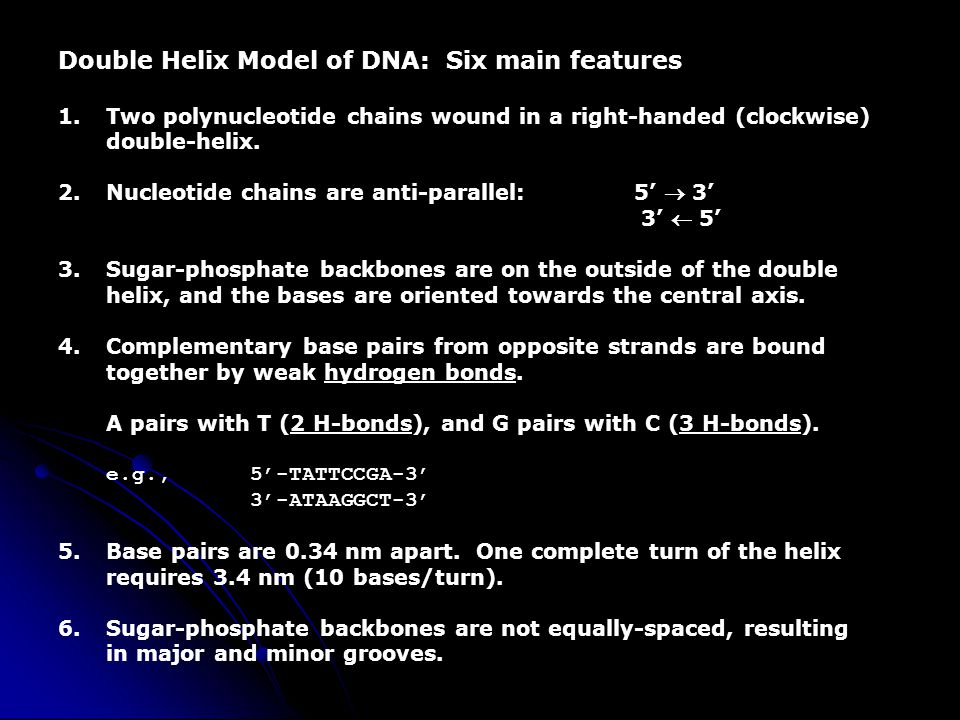 Double Helix Model of DNA: Six main features 1.Two polynucleotide chains wound in a right-handed (clockwise) double-helix. 2.Nucleotide chains are ant