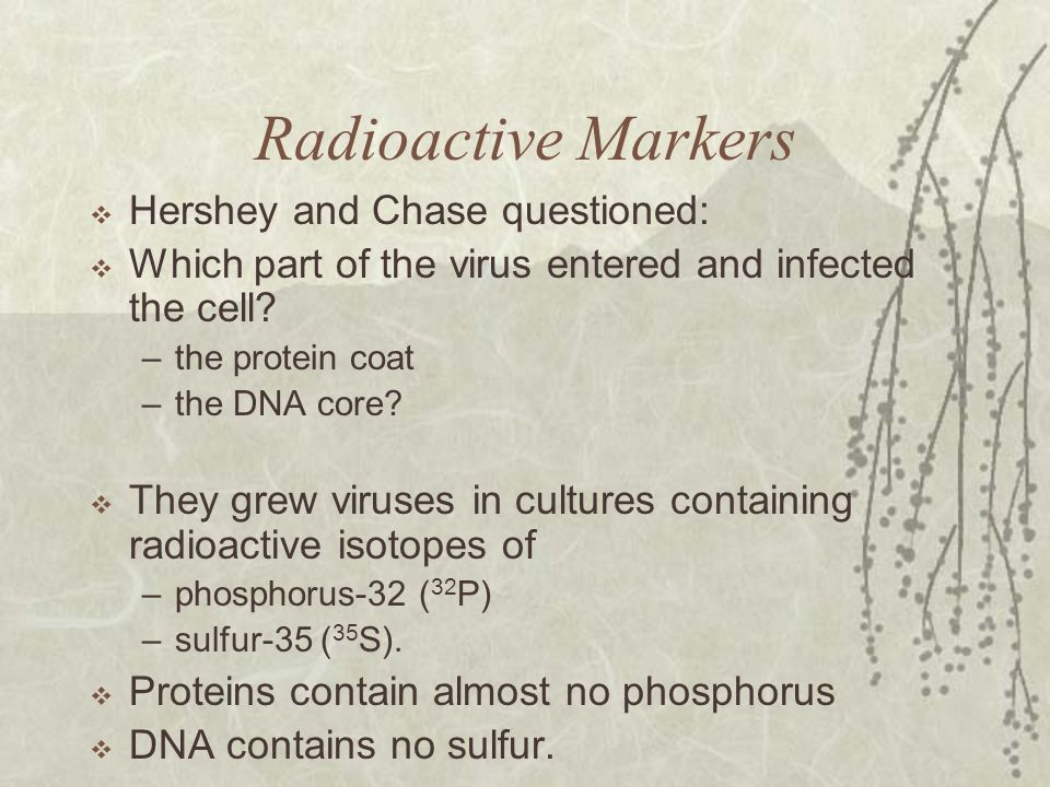 Radioactive Markers  Hershey and Chase questioned:  Which part of the virus entered and infected the cell? –the protein coat –the DNA core?  They g