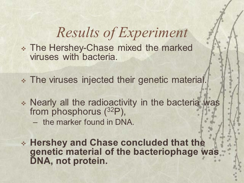 Results of Experiment  The Hershey-Chase mixed the marked viruses with bacteria.  The viruses injected their genetic material.  Nearly all the radi