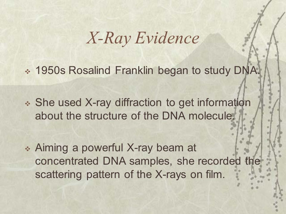 X-Ray Evidence  1950s Rosalind Franklin began to study DNA.  She used X-ray diffraction to get information about the structure of the DNA molecule.