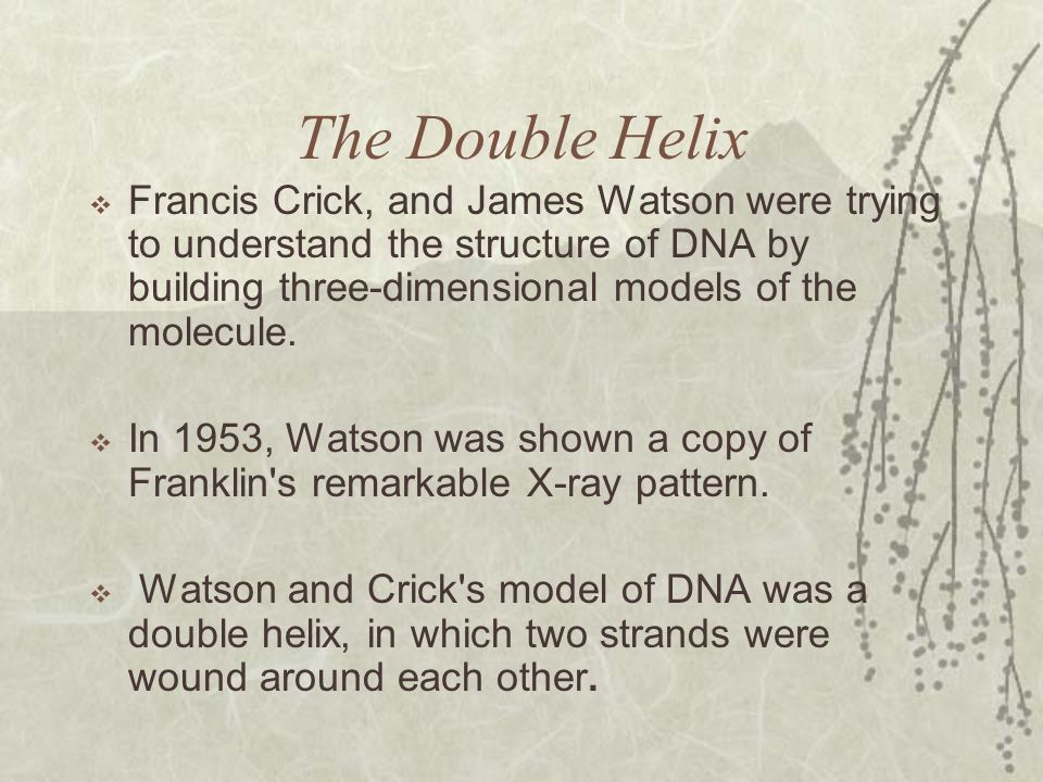 The Double Helix  Francis Crick, and James Watson were trying to understand the structure of DNA by building three-dimensional models of the molecule