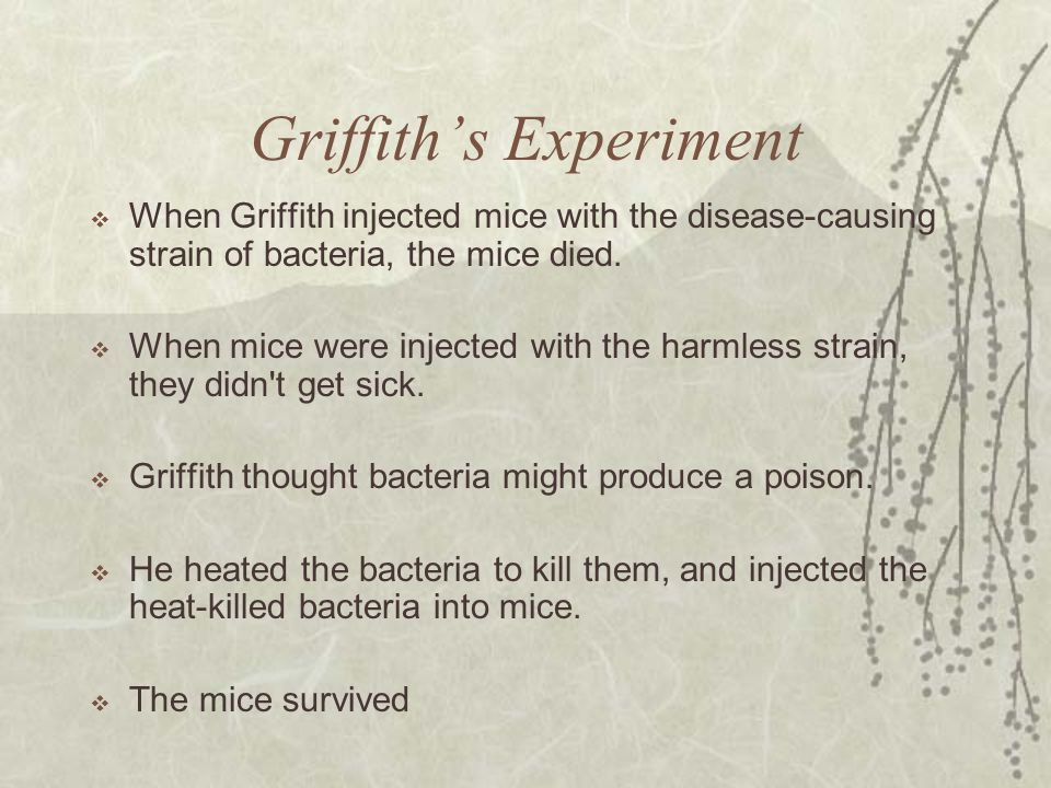 Griffith's Experiment  When Griffith injected mice with the disease-causing strain of bacteria, the mice died.  When mice were injected with the har