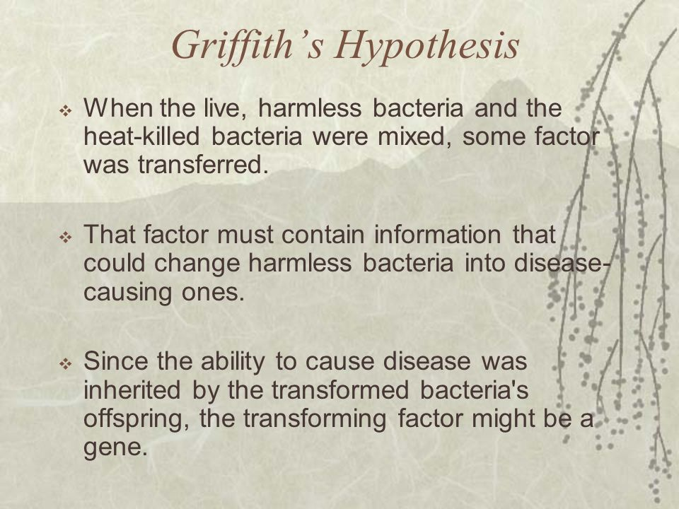 Griffith's Hypothesis  When the live, harmless bacteria and the heat-killed bacteria were mixed, some factor was transferred.  That factor must cont