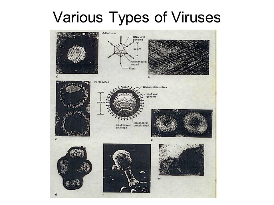 Various Types of Viruses