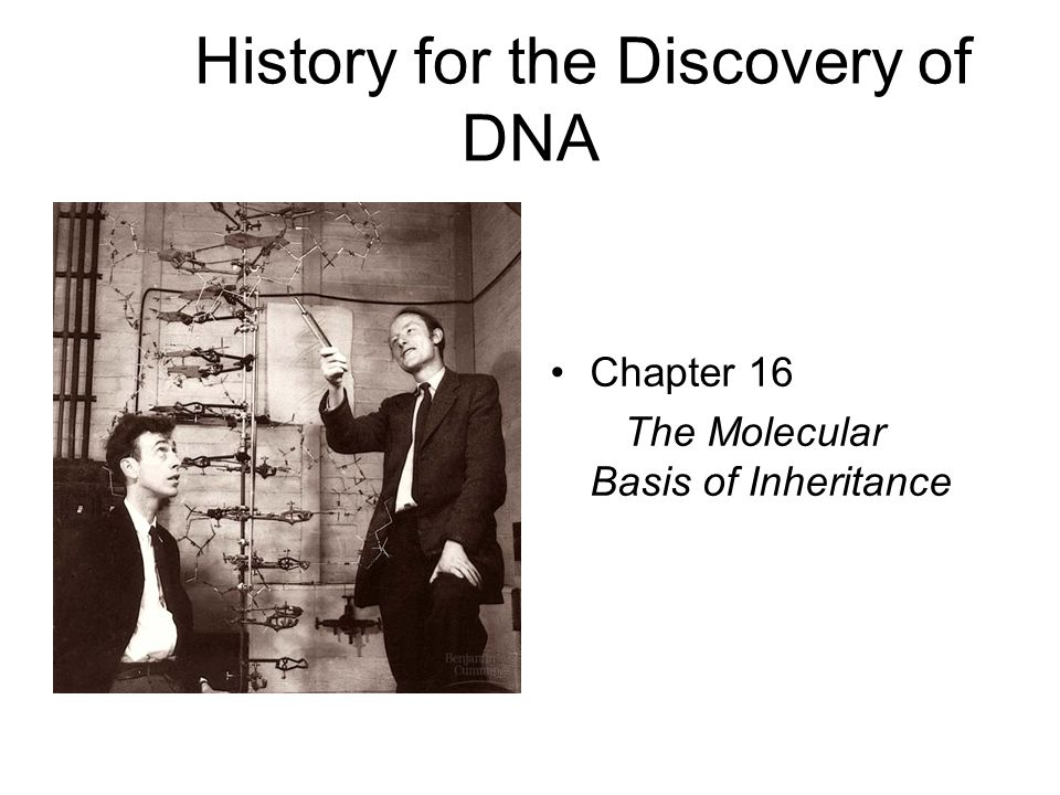 History for the Discovery of DNA Chapter 16 The Molecular Basis of Inheritance