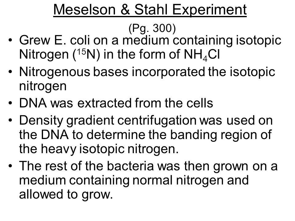 Meselson & Stahl Experiment (Pg. 300) Grew E.