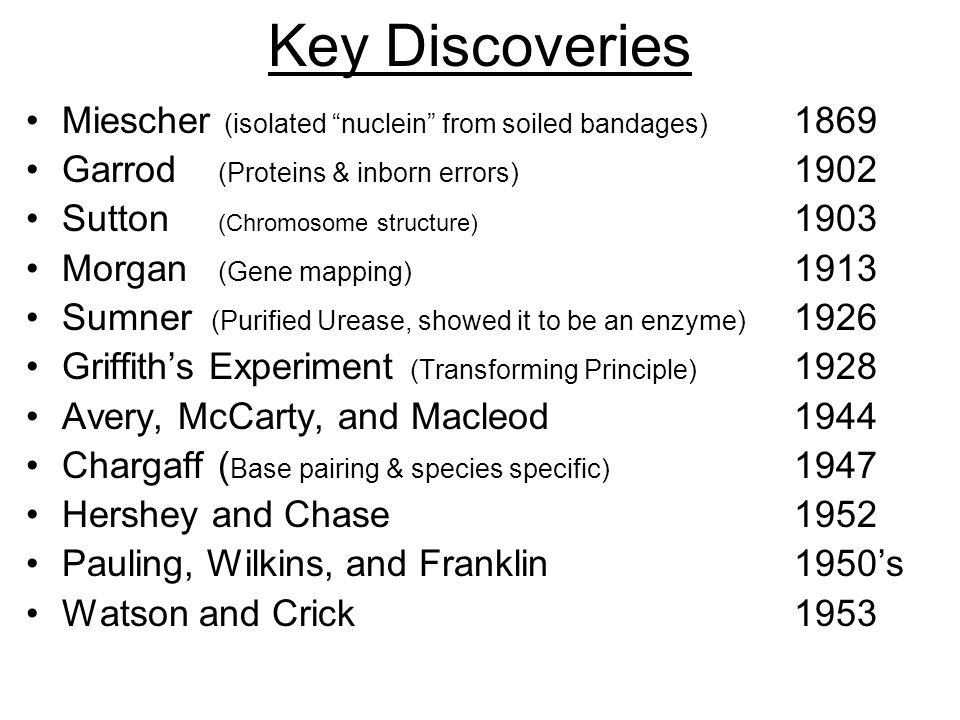 Key Discoveries Miescher (isolated nuclein from soiled bandages) 1869 Garrod (Proteins & inborn errors) 1902 Sutton (Chromosome structure) 1903 Morgan (Gene mapping) 1913 Sumner (Purified Urease, showed it to be an enzyme) 1926 Griffith's Experiment (Transforming Principle) 1928 Avery, McCarty, and Macleod1944 Chargaff( Base pairing & species specific) 1947 Hershey and Chase1952 Pauling, Wilkins, and Franklin1950's Watson and Crick1953