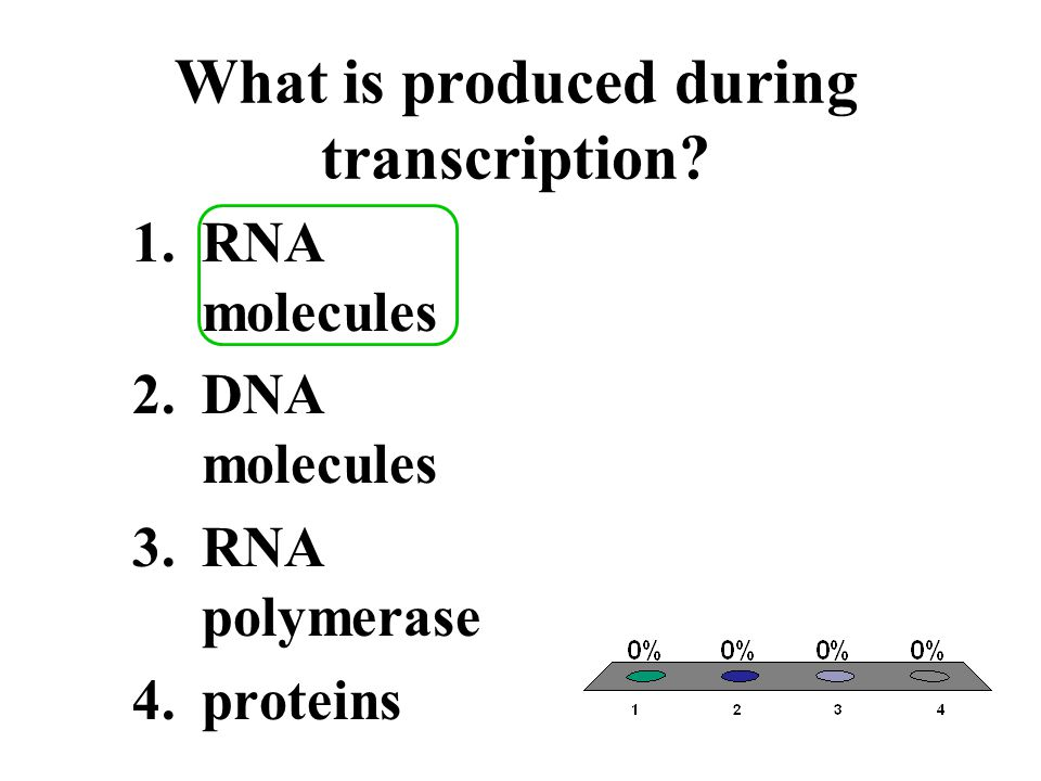What is produced during transcription? 1.RNA molecules 2.DNA molecules 3.RNA polymerase 4.proteins