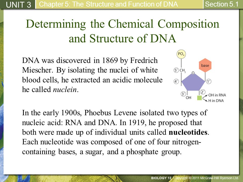 Determining the Chemical Composition and Structure of DNA DNA was discovered in 1869 by Fredrich Miescher. By isolating the nuclei of white blood cell