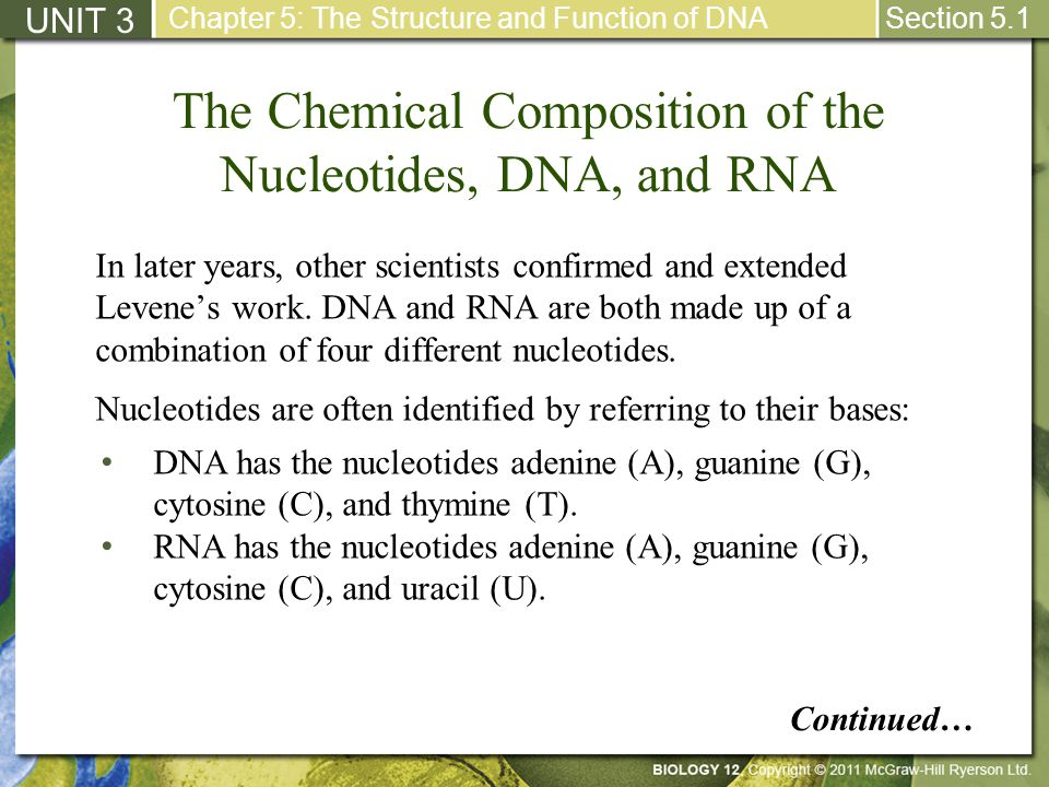 The Chemical Composition of the Nucleotides, DNA, and RNA UNIT 3 Chapter 5: The Structure and Function of DNA Section 5.1 DNA has the nucleotides aden