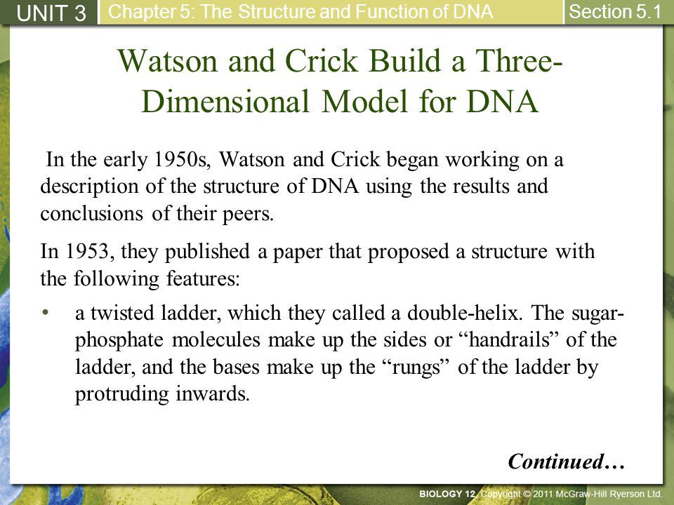 Watson and Crick Build a Three- Dimensional Model for DNA UNIT 3 Chapter 5: The Structure and Function of DNA Section 5.1 a twisted ladder, which they