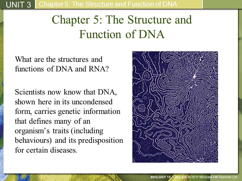 Chapter 5: The Structure and Function of DNA What are the structures and functions of DNA and RNA? Scientists now know that DNA, shown here in its unc