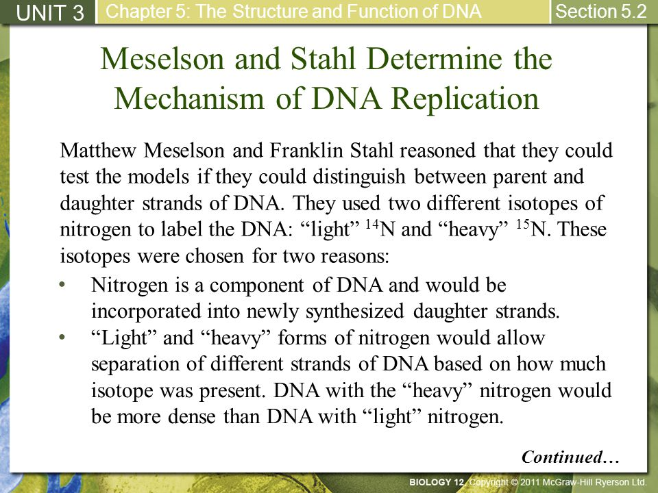 Meselson and Stahl Determine the Mechanism of DNA Replication UNIT 3 Chapter 5: The Structure and Function of DNA Section 5.2 Matthew Meselson and Fra