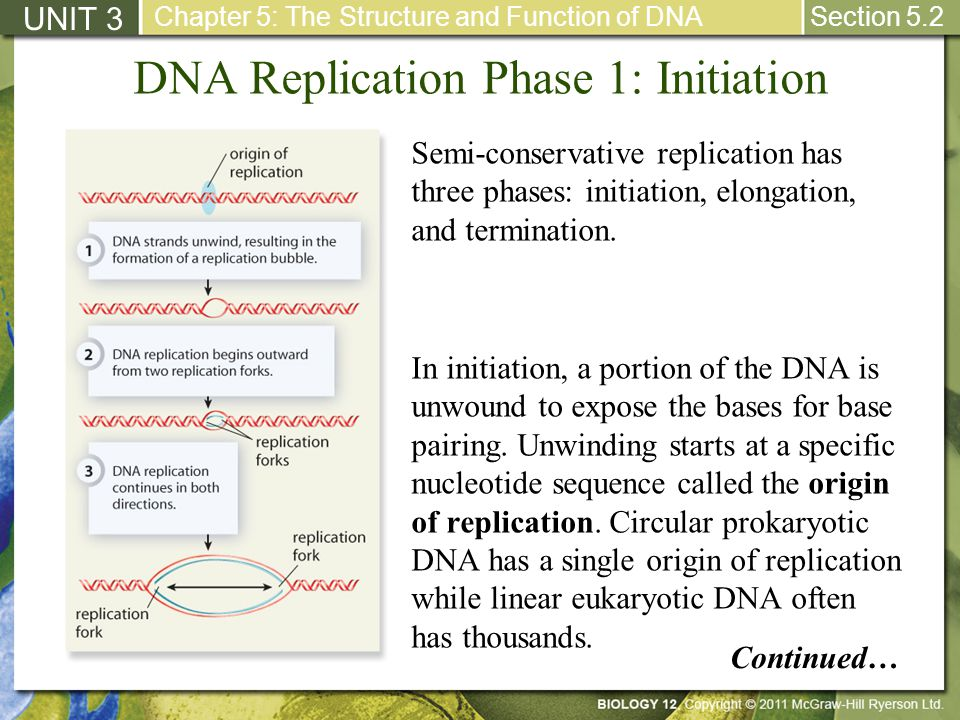 DNA Replication Phase 1: Initiation UNIT 3 Chapter 5: The Structure and Function of DNA Section 5.2 Semi-conservative replication has three phases: in