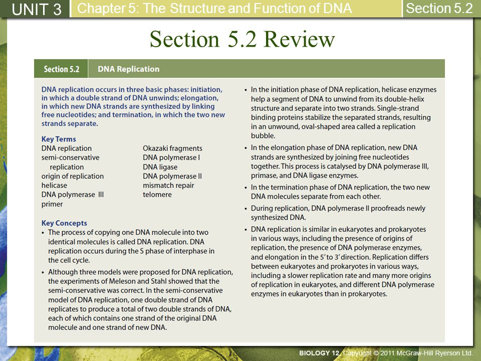Section 5.2 Review UNIT 3 Chapter 5: The Structure and Function of DNA Section 5.2