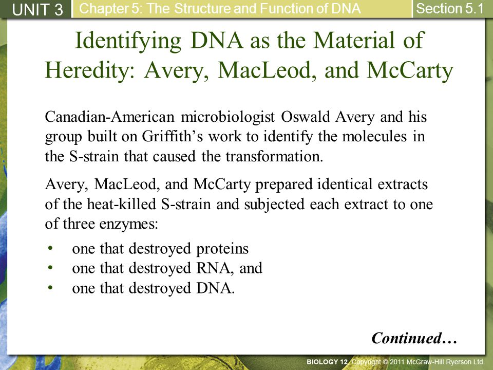 Identifying DNA as the Material of Heredity: Avery, MacLeod, and McCarty Each enzyme-treated extract was then mixed with live R-strain cells.