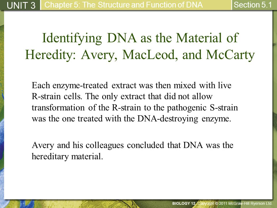 Elongation: Part I UNIT 3 Chapter 5: The Structure and Function of DNA Section 5.2 Two new strands are assembled using the parent DNA as a template.