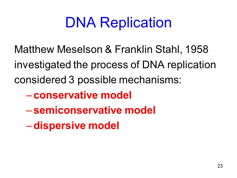 23 DNA Replication Matthew Meselson & Franklin Stahl, 1958 investigated the process of DNA replication considered 3 possible mechanisms: –conservative model –semiconservative model –dispersive model