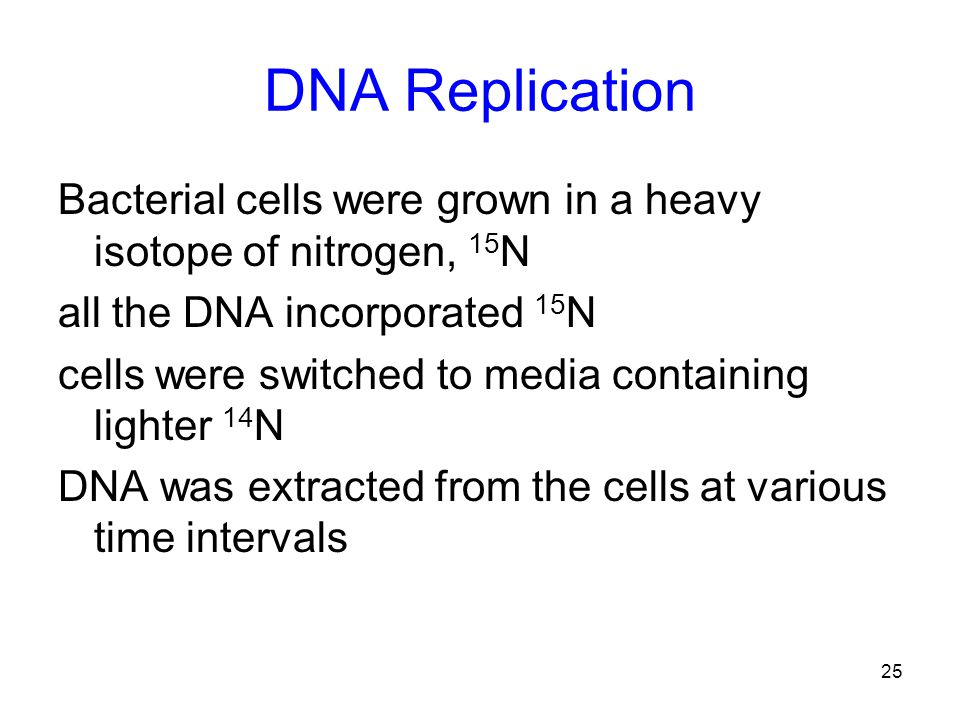 25 DNA Replication Bacterial cells were grown in a heavy isotope of nitrogen, 15 N all the DNA incorporated 15 N cells were switched to media containing lighter 14 N DNA was extracted from the cells at various time intervals