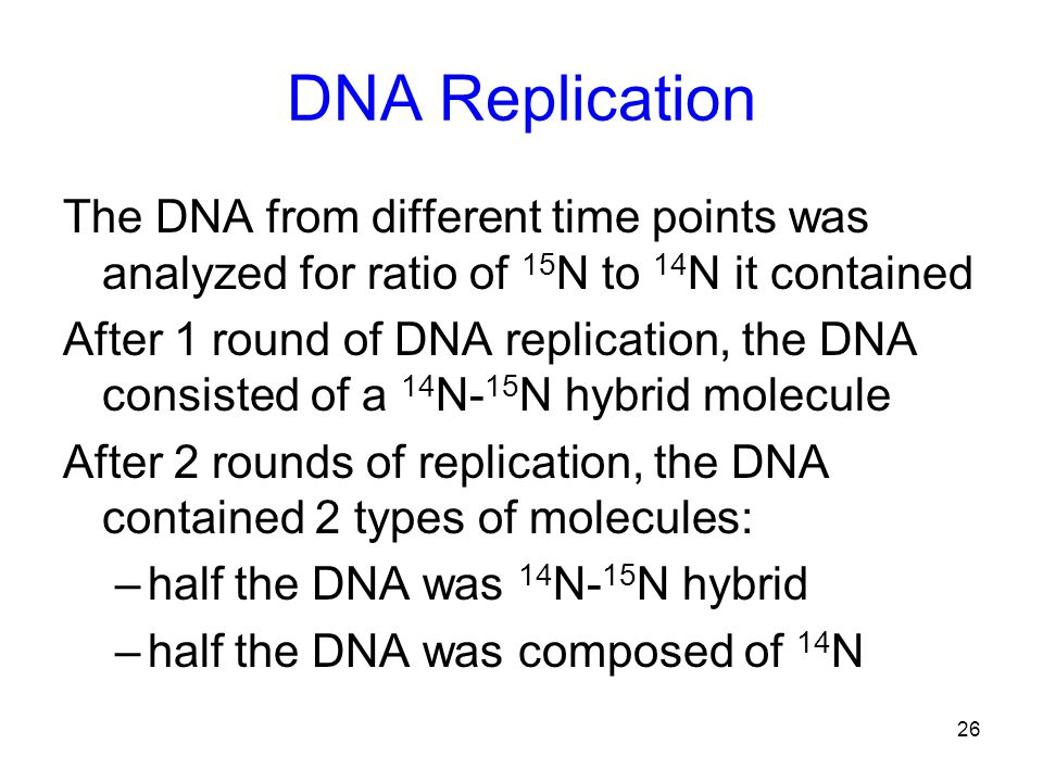 26 DNA Replication The DNA from different time points was analyzed for ratio of 15 N to 14 N it contained After 1 round of DNA replication, the DNA consisted of a 14 N- 15 N hybrid molecule After 2 rounds of replication, the DNA contained 2 types of molecules: –half the DNA was 14 N- 15 N hybrid –half the DNA was composed of 14 N