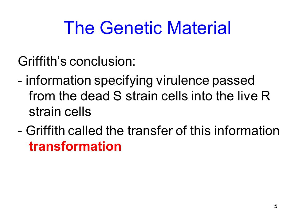 5 The Genetic Material Griffith's conclusion: - information specifying virulence passed from the dead S strain cells into the live R strain cells - Griffith called the transfer of this information transformation