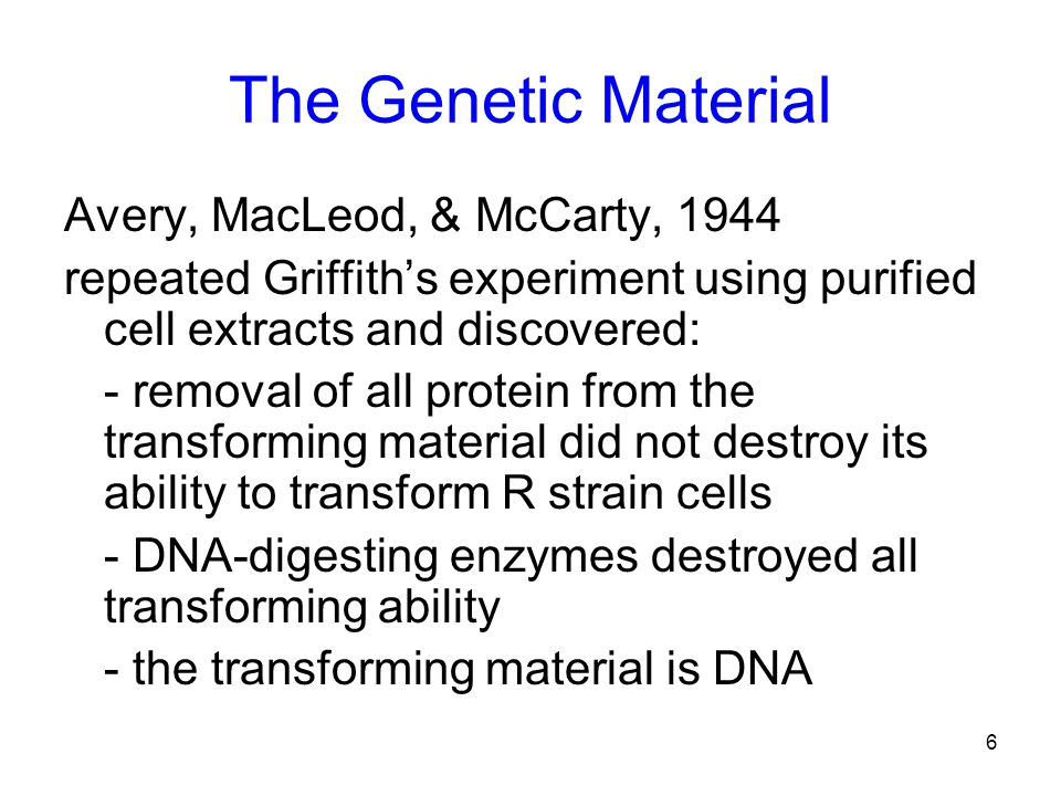 6 The Genetic Material Avery, MacLeod, & McCarty, 1944 repeated Griffith's experiment using purified cell extracts and discovered: - removal of all protein from the transforming material did not destroy its ability to transform R strain cells - DNA-digesting enzymes destroyed all transforming ability - the transforming material is DNA