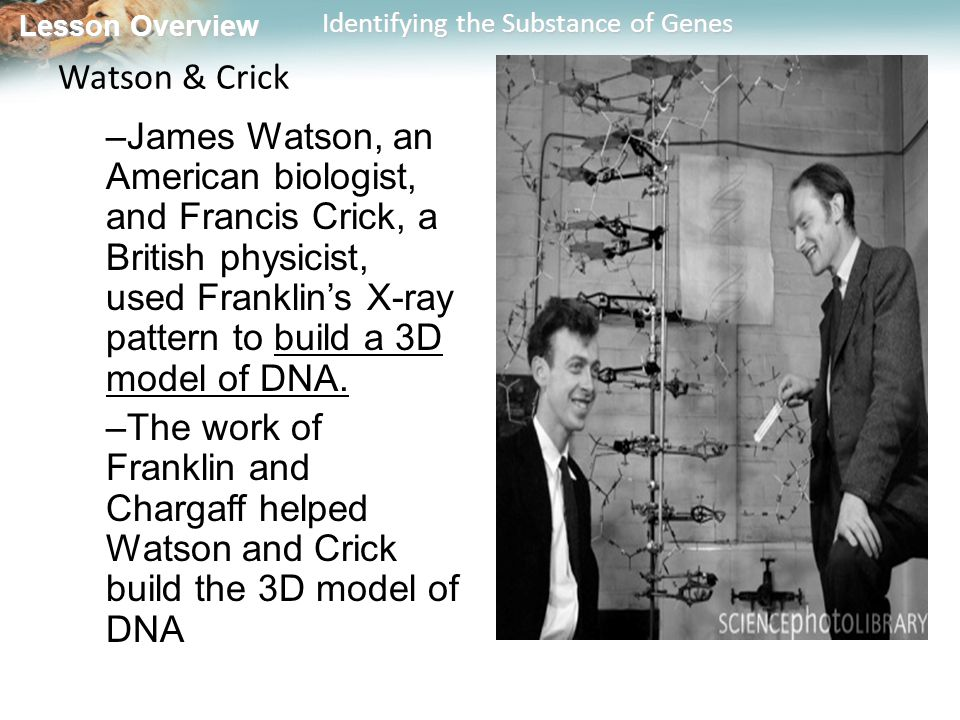 Lesson Overview Lesson Overview Identifying the Substance of Genes Watson & Crick –James Watson, an American biologist, and Francis Crick, a British p