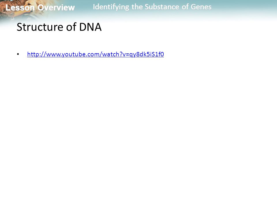 Lesson Overview Lesson Overview Identifying the Substance of Genes Structure of DNA http://www.youtube.com/watch?v=qy8dk5iS1f0