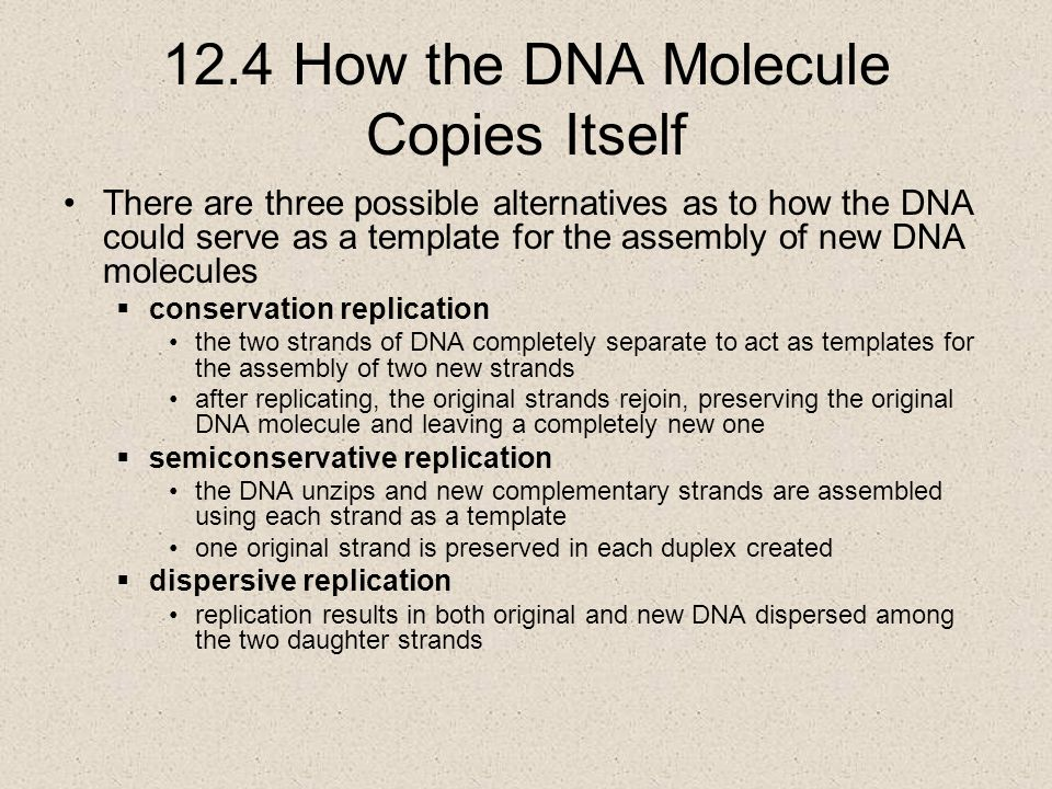 12.4 How the DNA Molecule Copies Itself There are three possible alternatives as to how the DNA could serve as a template for the assembly of new DNA molecules  conservation replication the two strands of DNA completely separate to act as templates for the assembly of two new strands after replicating, the original strands rejoin, preserving the original DNA molecule and leaving a completely new one  semiconservative replication the DNA unzips and new complementary strands are assembled using each strand as a template one original strand is preserved in each duplex created  dispersive replication replication results in both original and new DNA dispersed among the two daughter strands