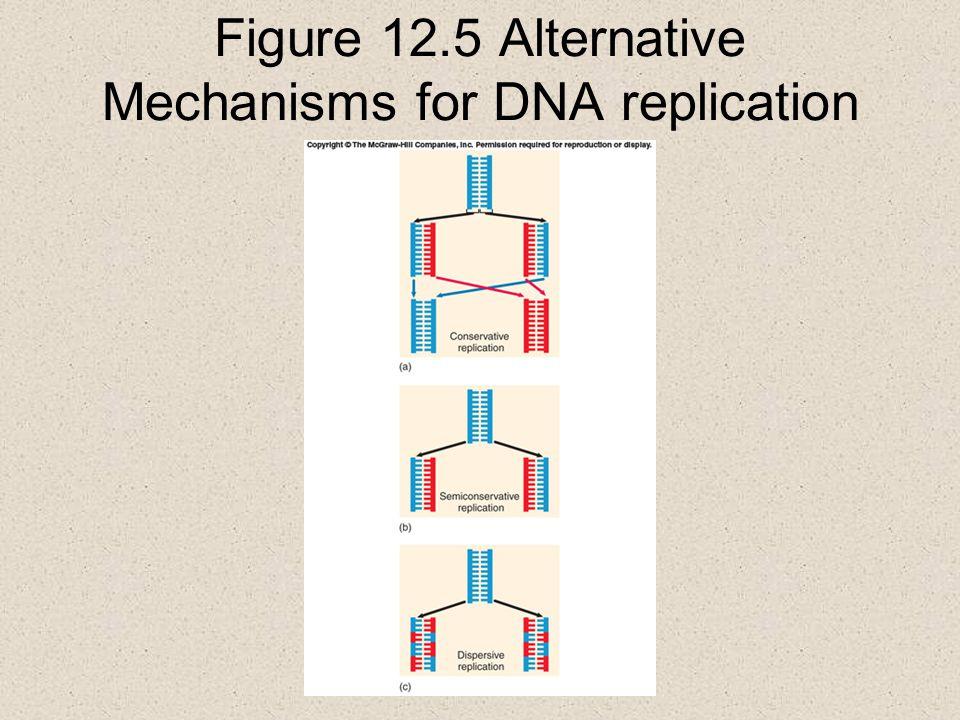 Figure 12.5 Alternative Mechanisms for DNA replication