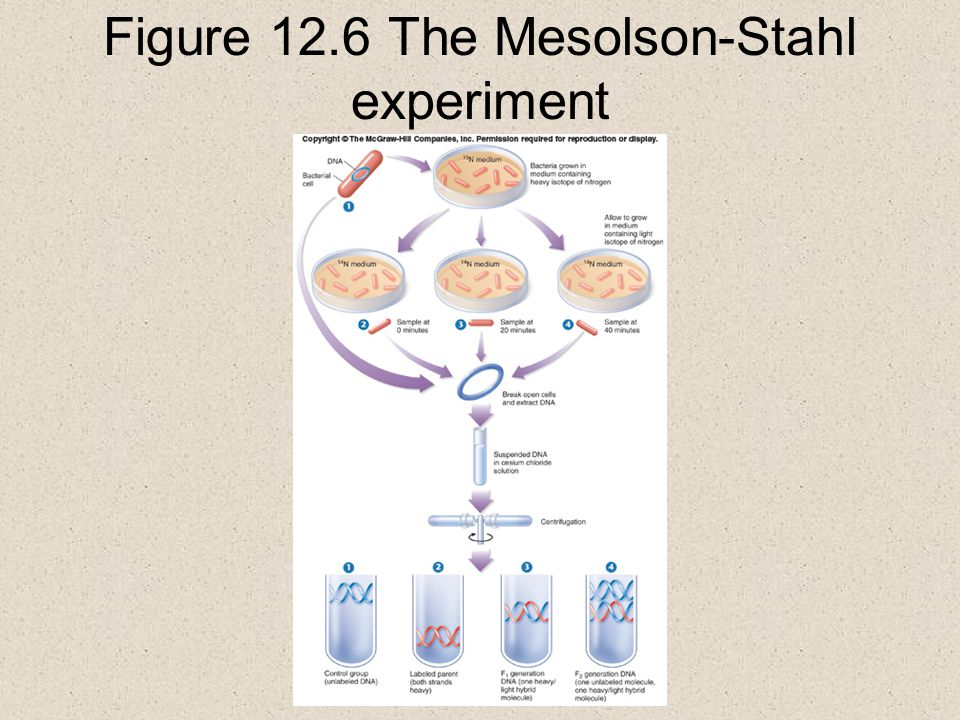 Figure 12.6 The Mesolson-Stahl experiment