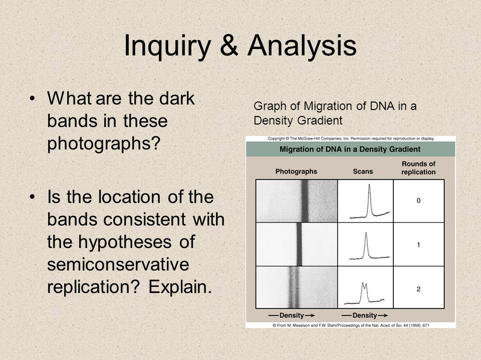Inquiry & Analysis What are the dark bands in these photographs.
